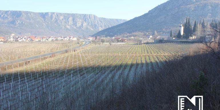 Vinograd Barbarić slika 2