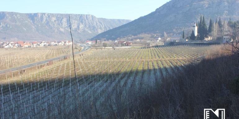 Vinograd Barbarić slika 5