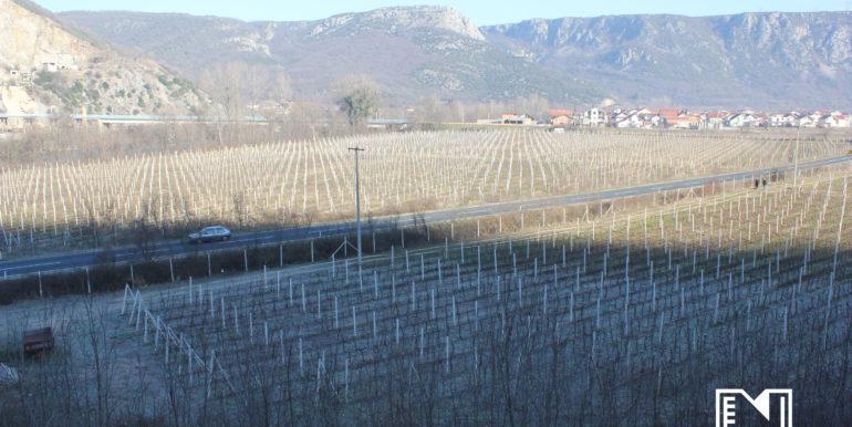 Vinograd Barbarić slika 6